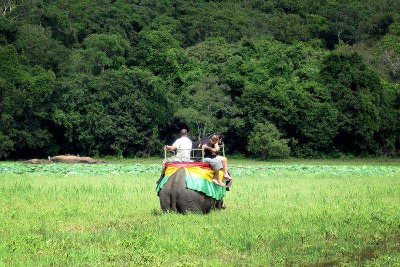 نيجومبو - مقر إيواء الفيلة - هابارانا
